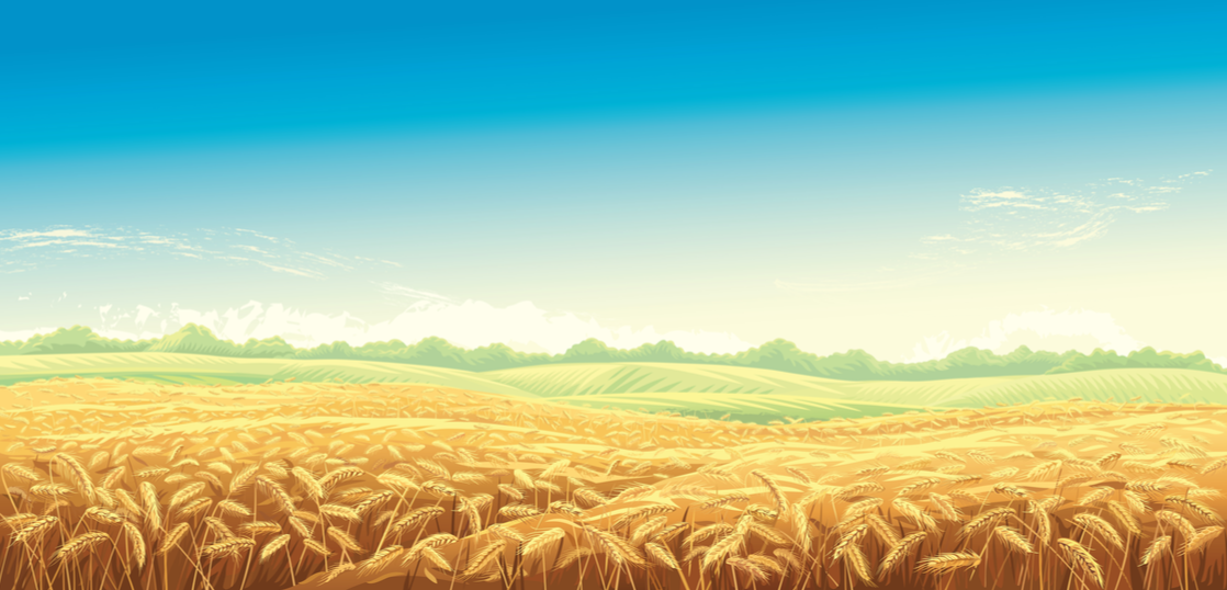 あなたの人生に収穫はありますか?【未来にたくさんのタネを蒔こう】